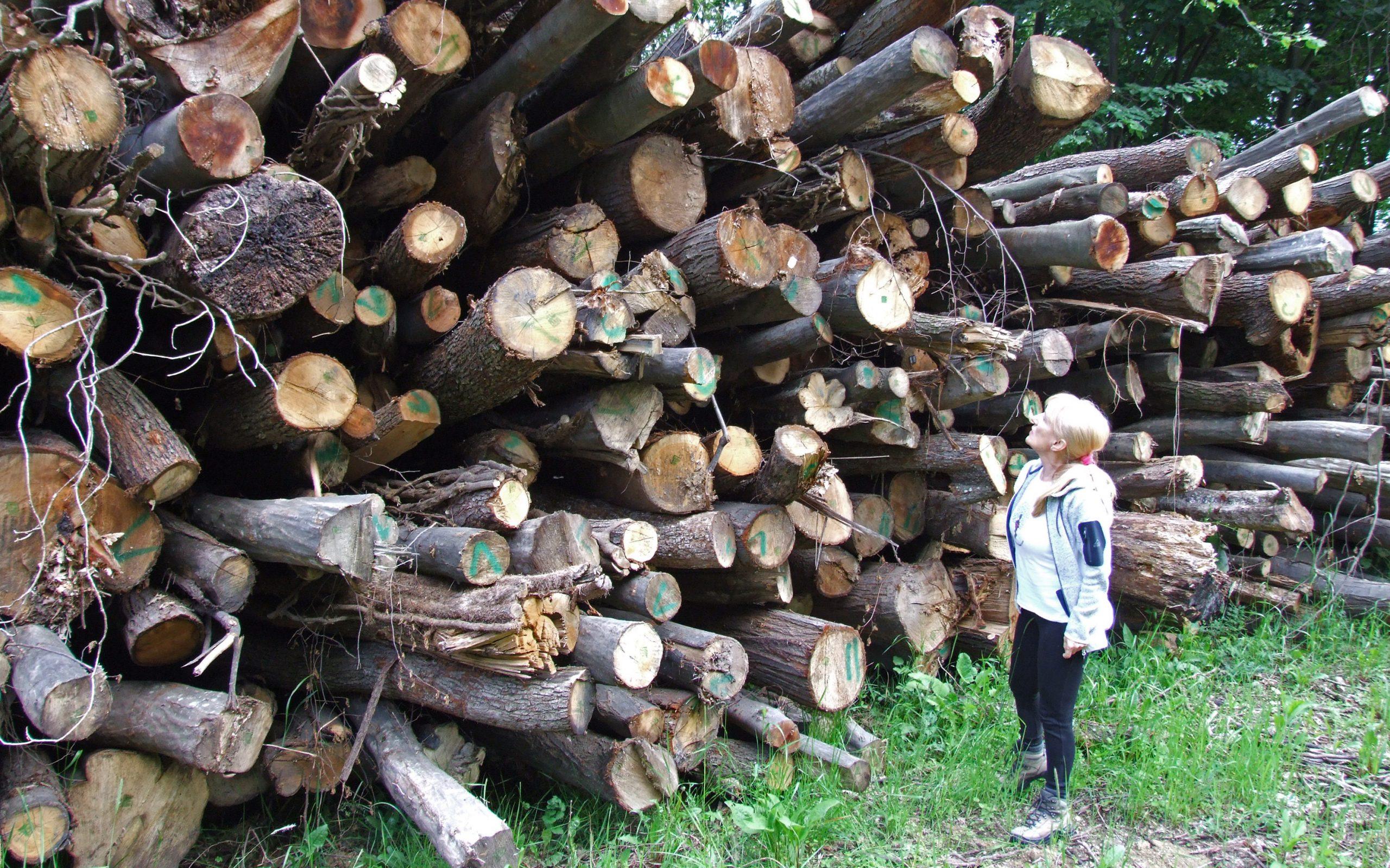 """Letnji ekološki forum: Pokret """"Odbranimo šume Fruške gore"""" – Borba protiv seče šuma"""